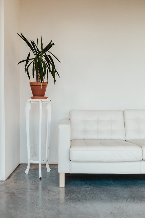 white couch with green plant on white stand next to it