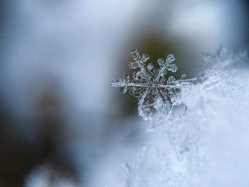 snowflake or winter